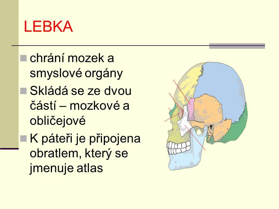 LEBKA chrání mozek a smyslové orgány