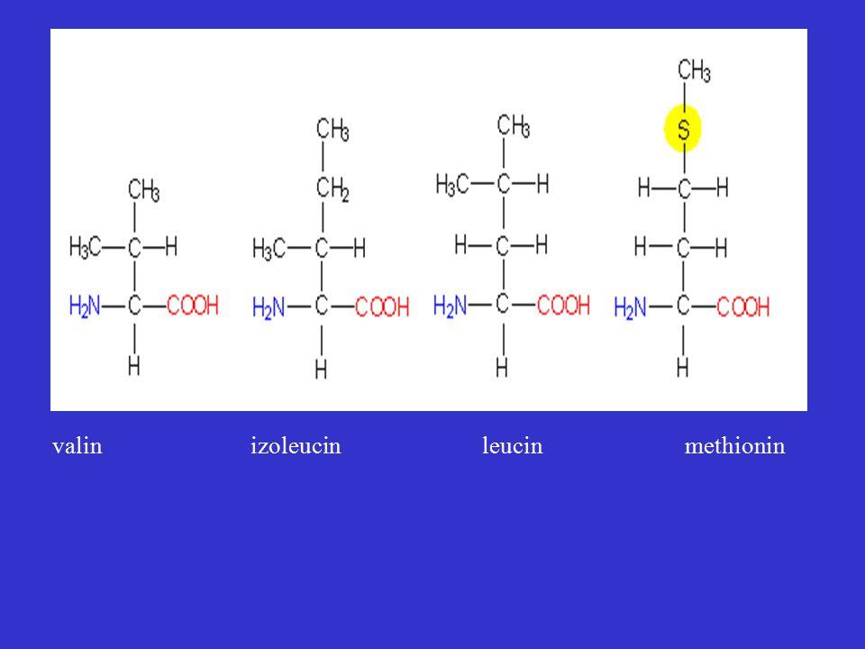 valin izoleucin leucin methionin