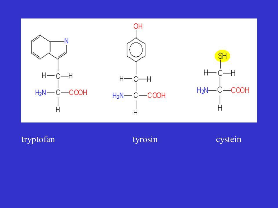 tryptofan tyrosin cystein