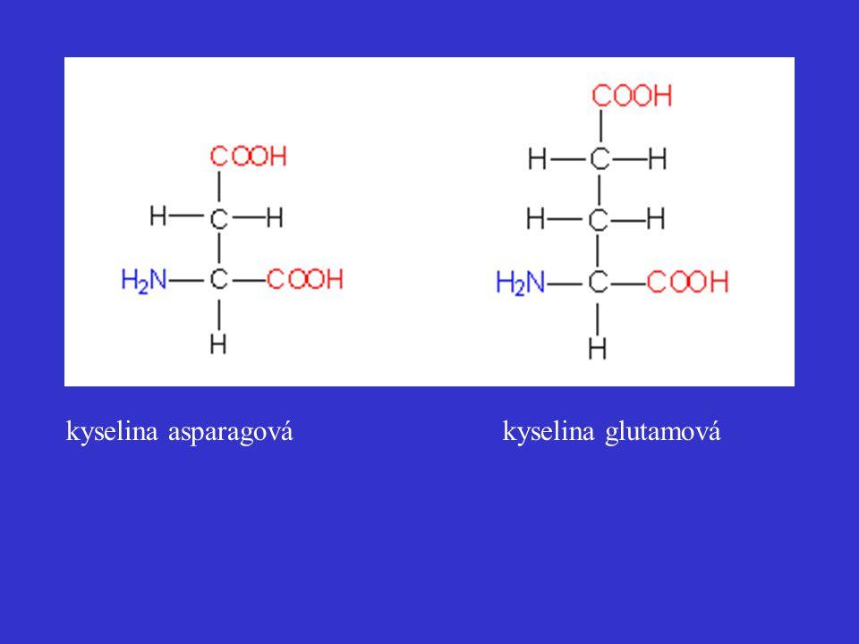 kyselina asparagová kyselina glutamová