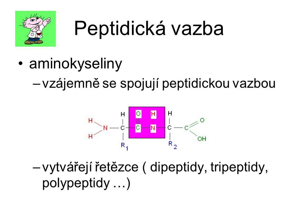 Peptidická vazba aminokyseliny vzájemně se spojují peptidickou vazbou