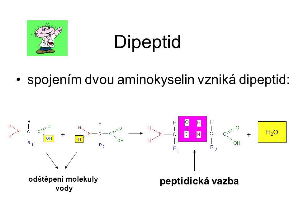 Dipeptid spojením dvou aminokyselin vzniká dipeptid: peptidická vazba