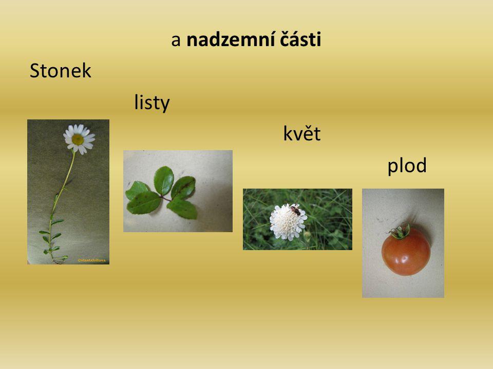 a nadzemní části Stonek listy květ plod