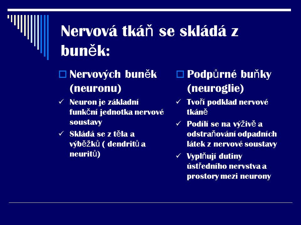 Nervová tkáň se skládá z buněk: