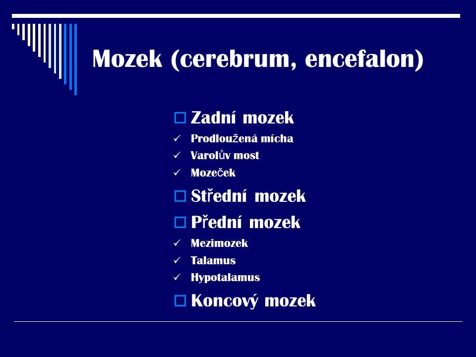 Mozek (cerebrum, encefalon)