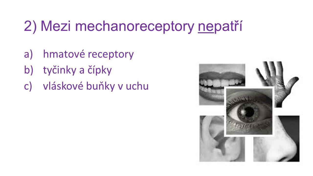 2) Mezi mechanoreceptory nepatří