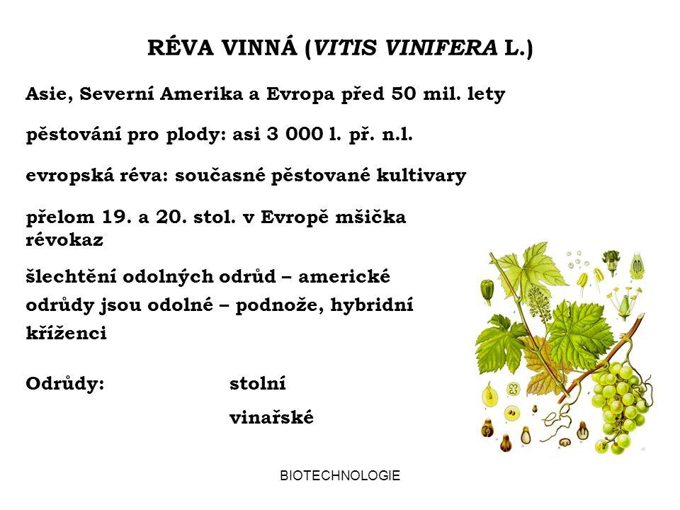 RÉVA VINNÁ (VITIS VINIFERA L.)