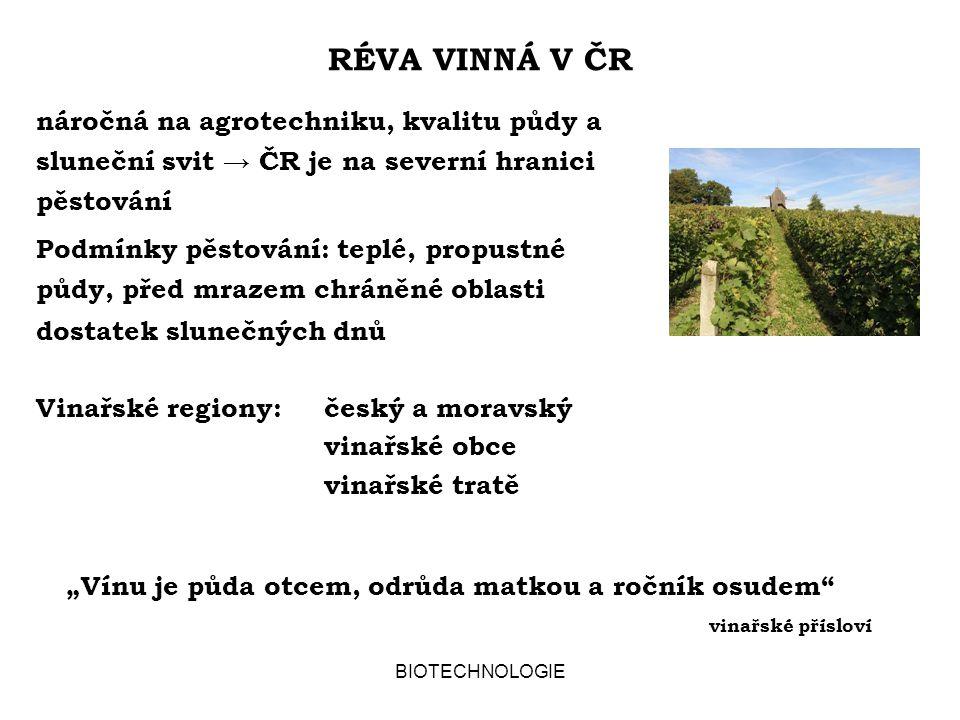 RÉVA VINNÁ V ČR náročná na agrotechniku, kvalitu půdy a sluneční svit → ČR je na severní hranici pěstování.