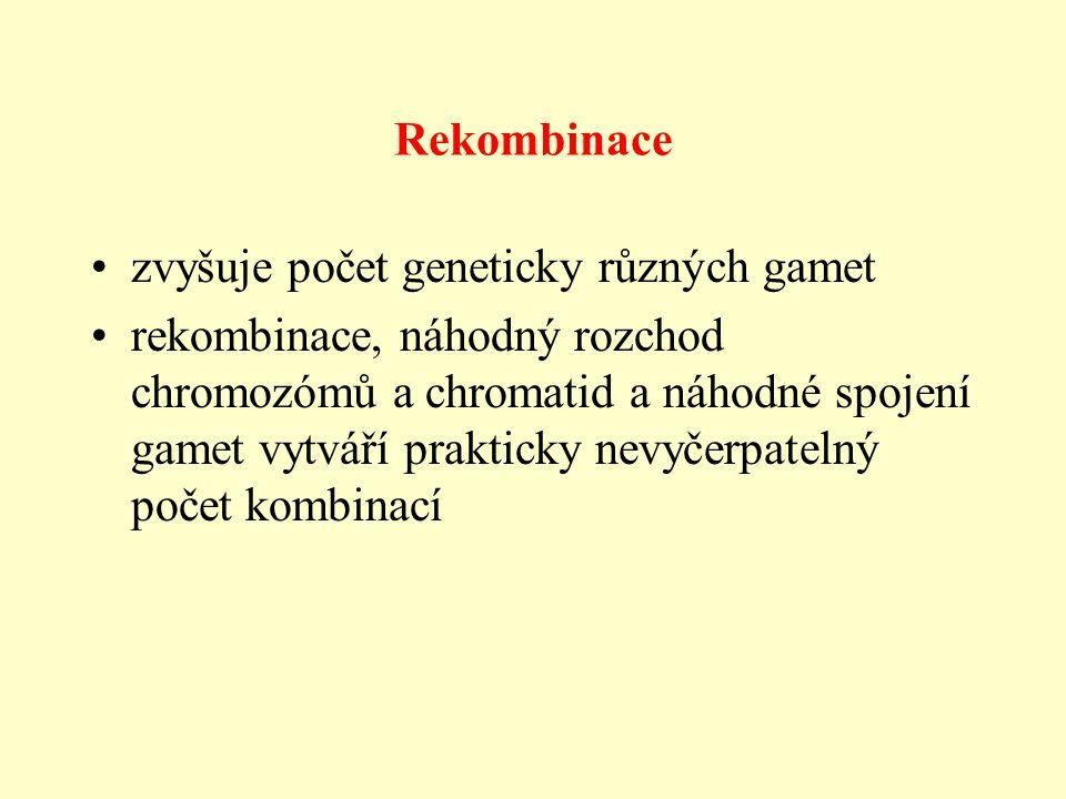 Rekombinace zvyšuje počet geneticky různých gamet.