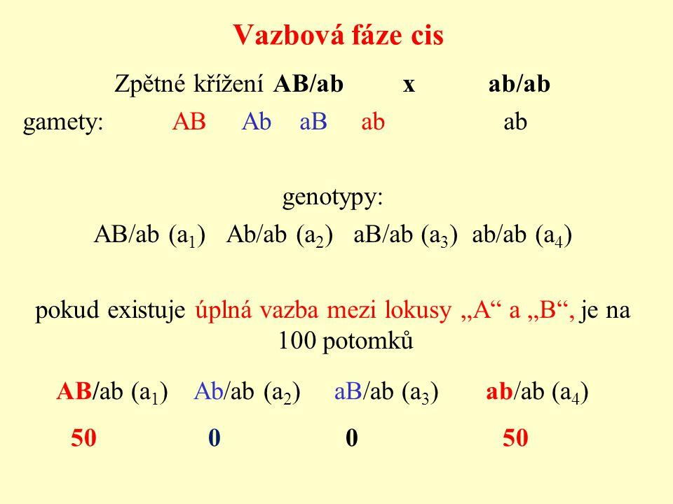 Vazbová fáze cis Zpětné křížení AB/ab x ab/ab gamety: AB Ab aB ab ab