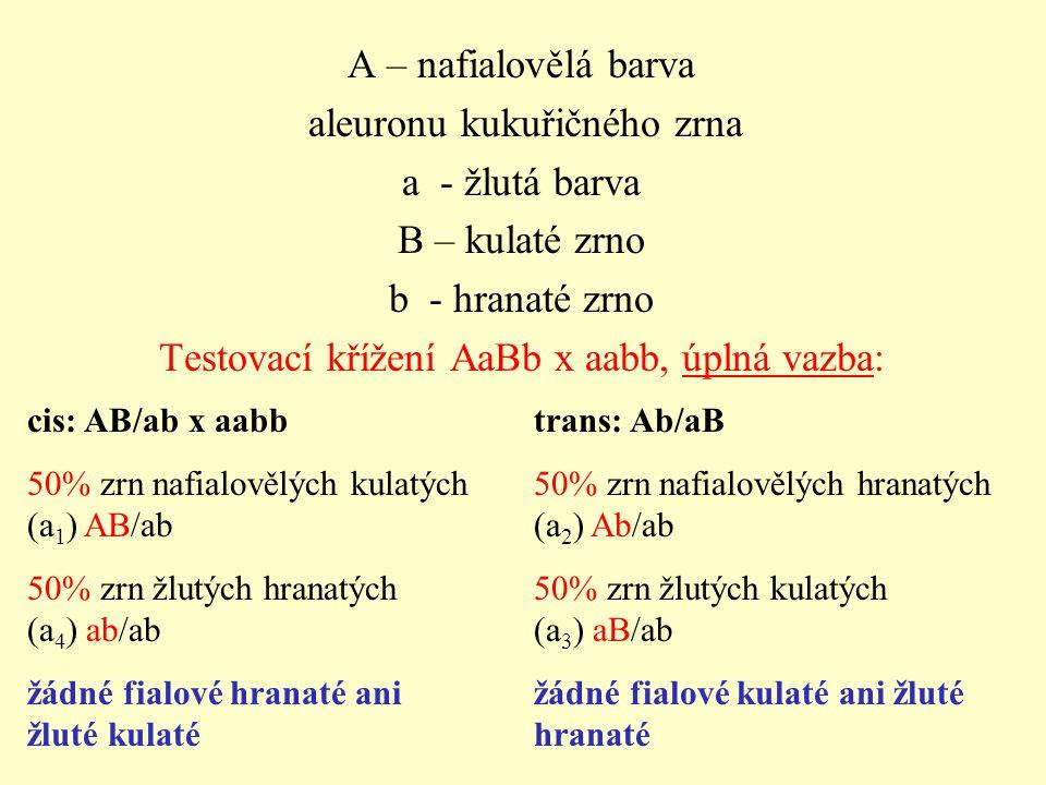 aleuronu kukuřičného zrna a - žlutá barva B – kulaté zrno