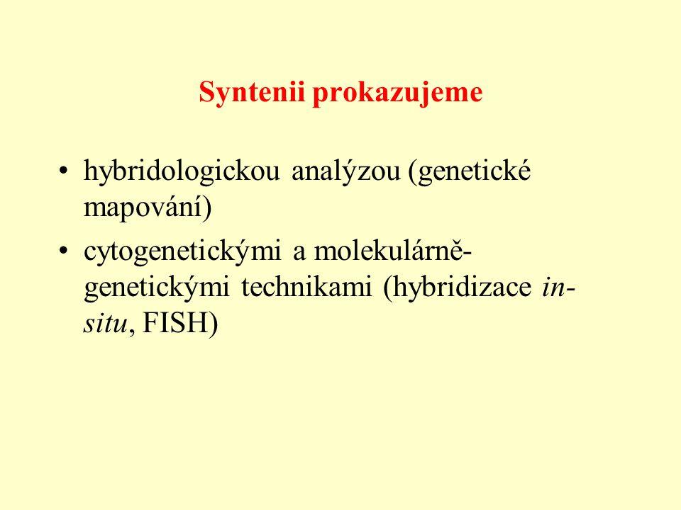 Syntenii prokazujeme hybridologickou analýzou (genetické mapování) cytogenetickými a molekulárně-genetickými technikami (hybridizace in-situ, FISH)