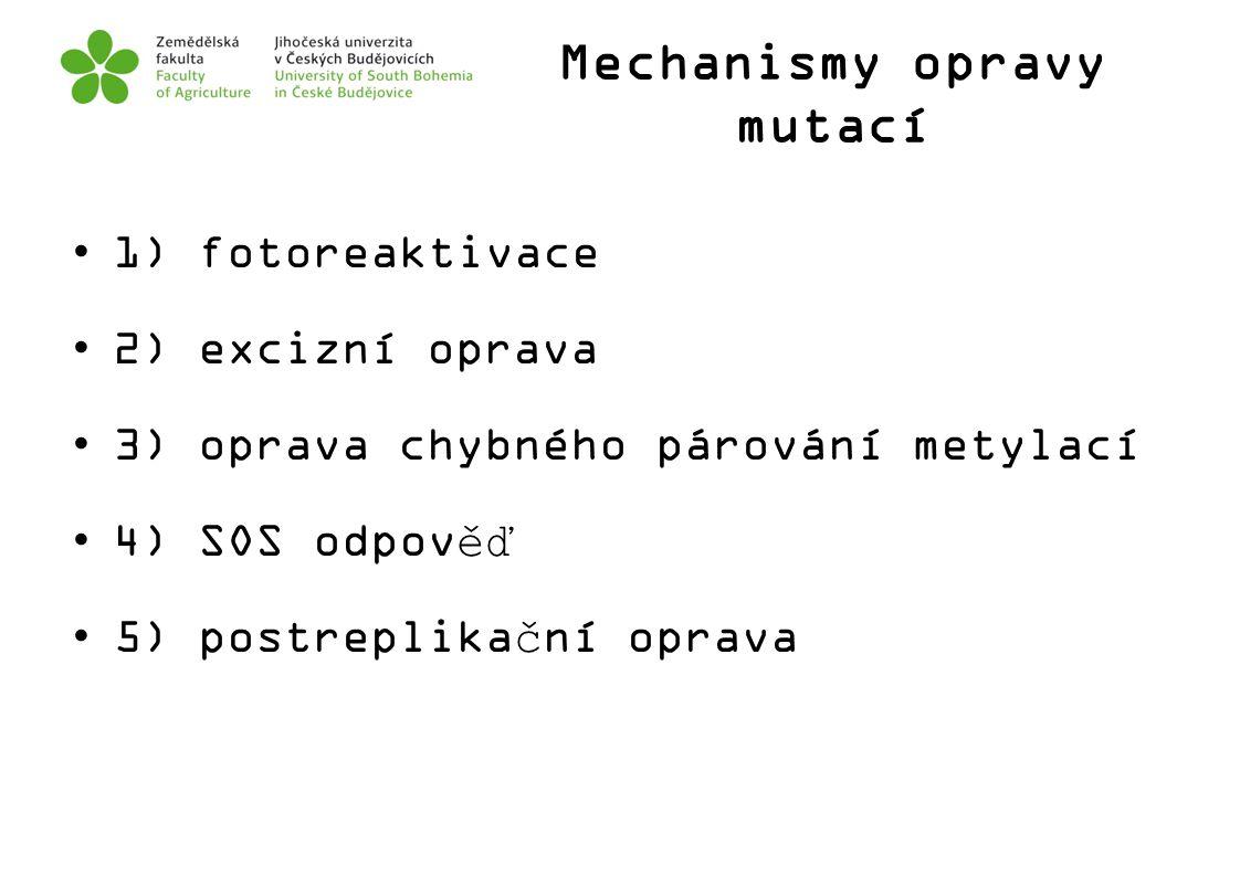Mechanismy opravy mutací