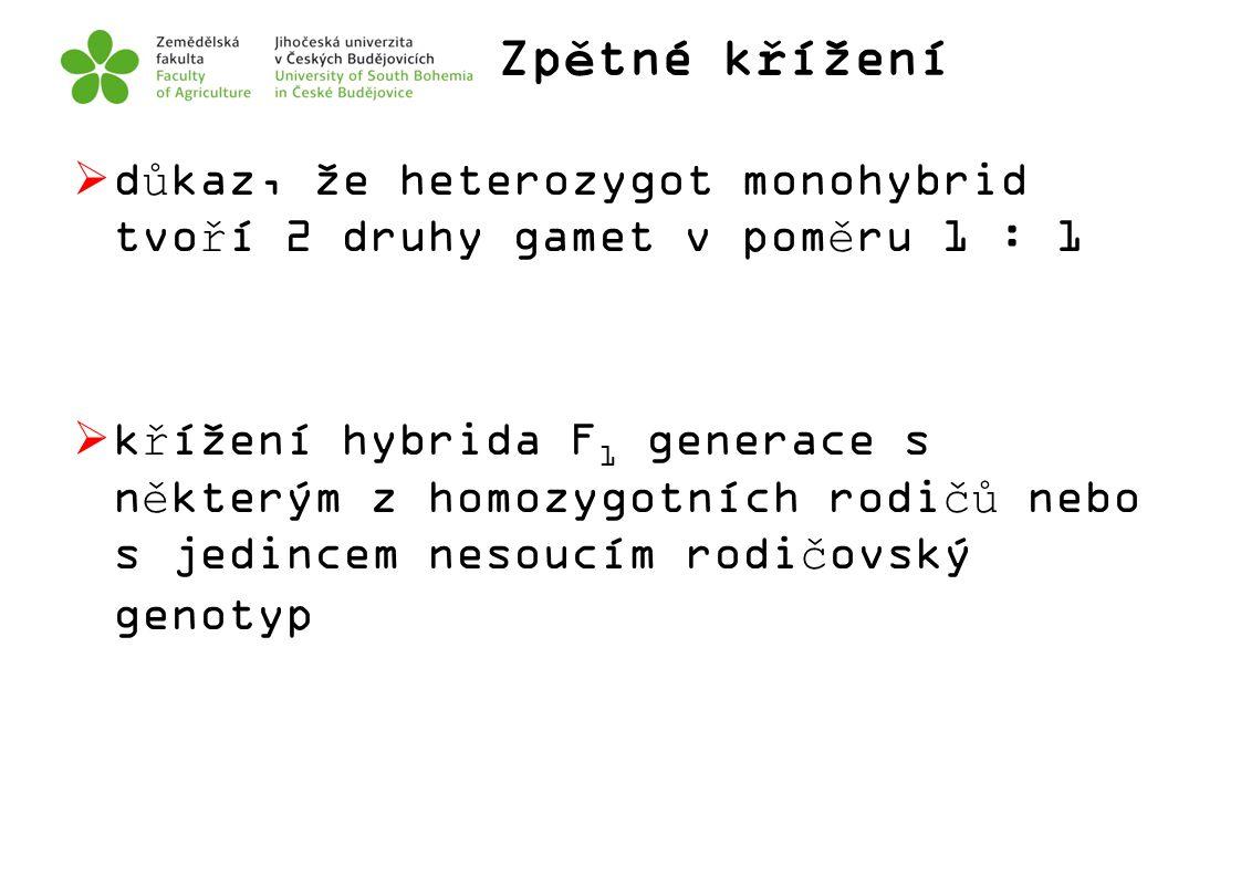 Zpětné křížení důkaz, že heterozygot monohybrid tvoří 2 druhy gamet v poměru 1 : 1.