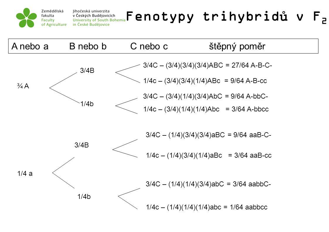 Fenotypy trihybridů v F2