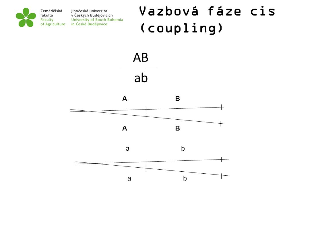Vazbová fáze cis (coupling)