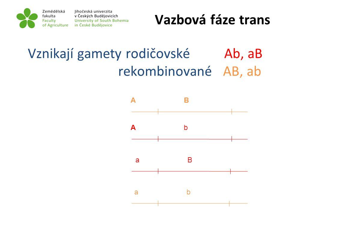 Vznikají gamety rodičovské Ab, aB rekombinované AB, ab