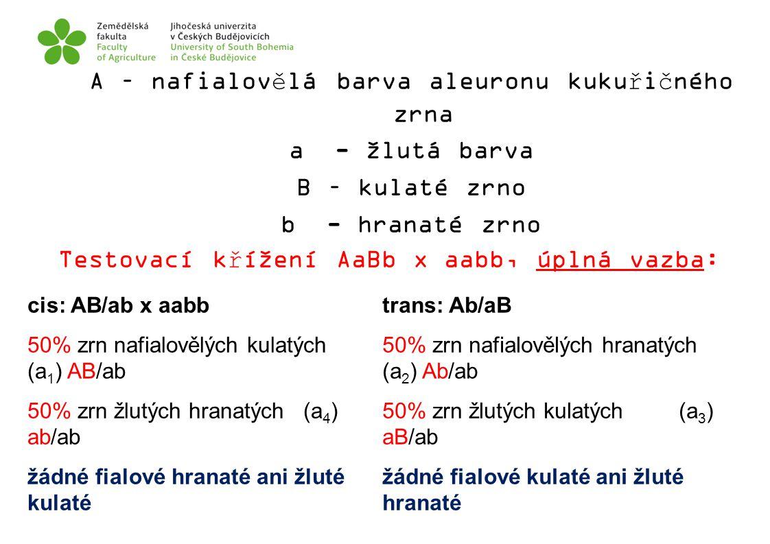 A – nafialovělá barva aleuronu kukuřičného zrna
