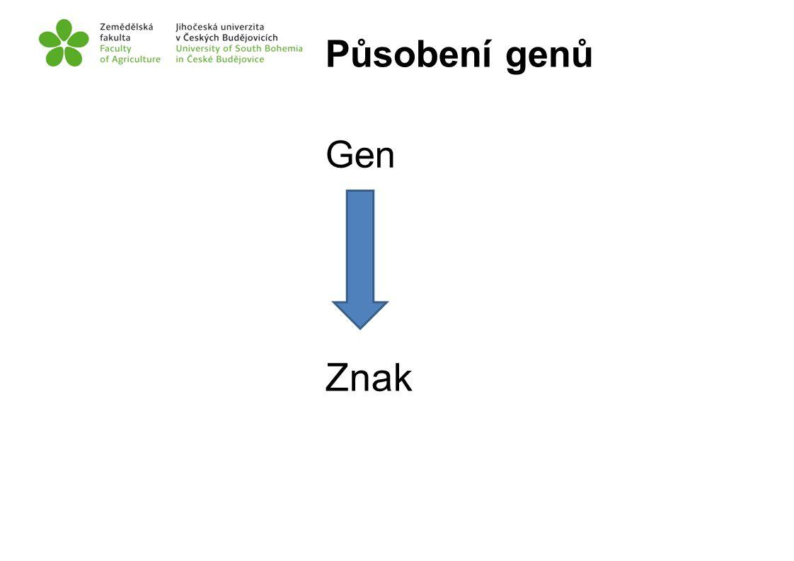 Působení genů Gen Znak