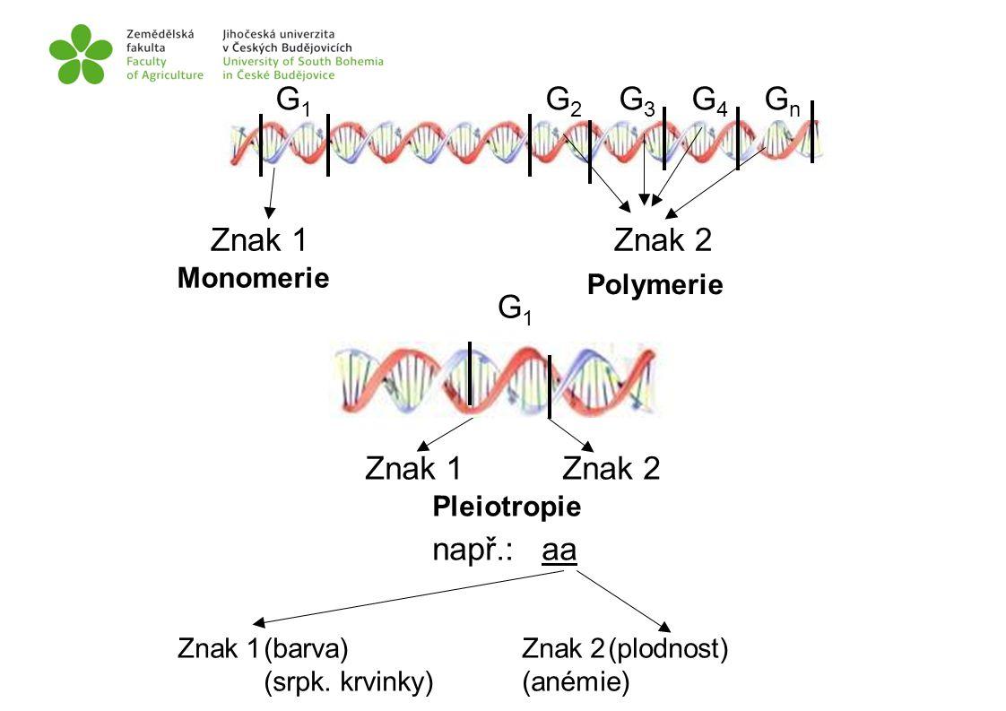 G1 G2 G3 G4 Gn Znak 1 Znak 2 G1 Znak 1 Znak 2 např.: aa Monomerie