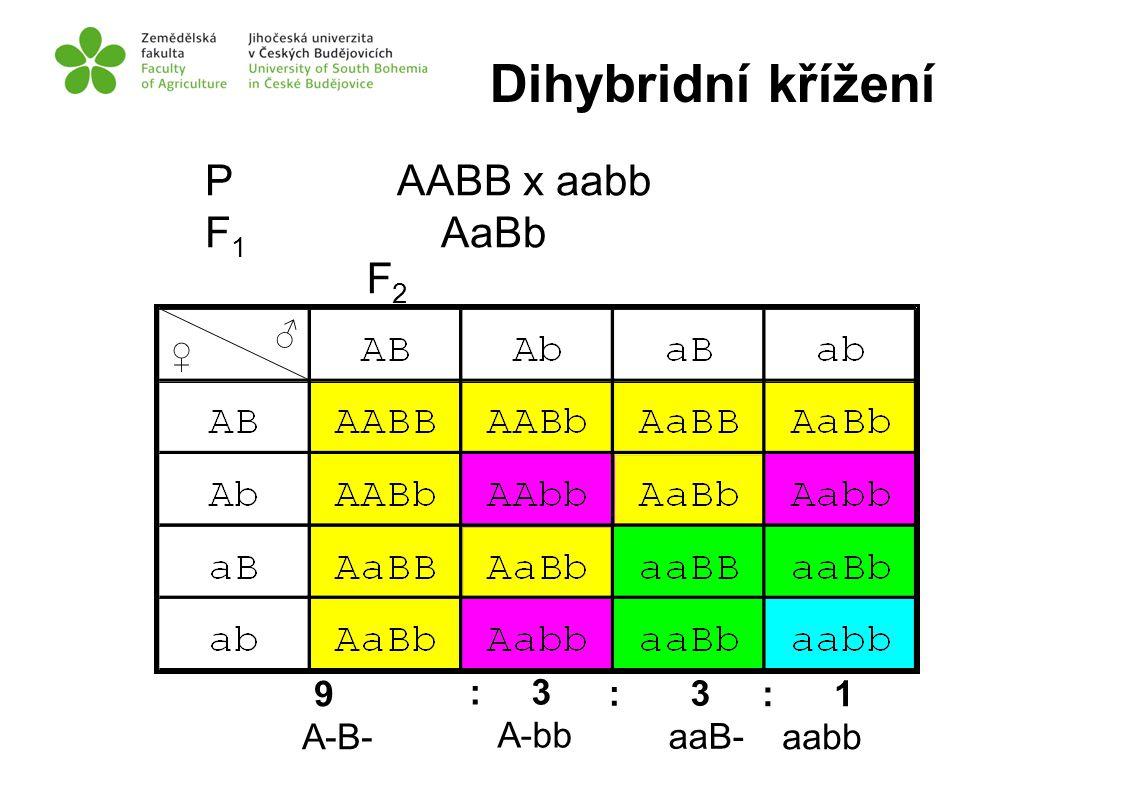Dihybridní křížení P AABB x aabb F1 AaBb F2 9 A-B- : 3 A-bb : 3 aaB-