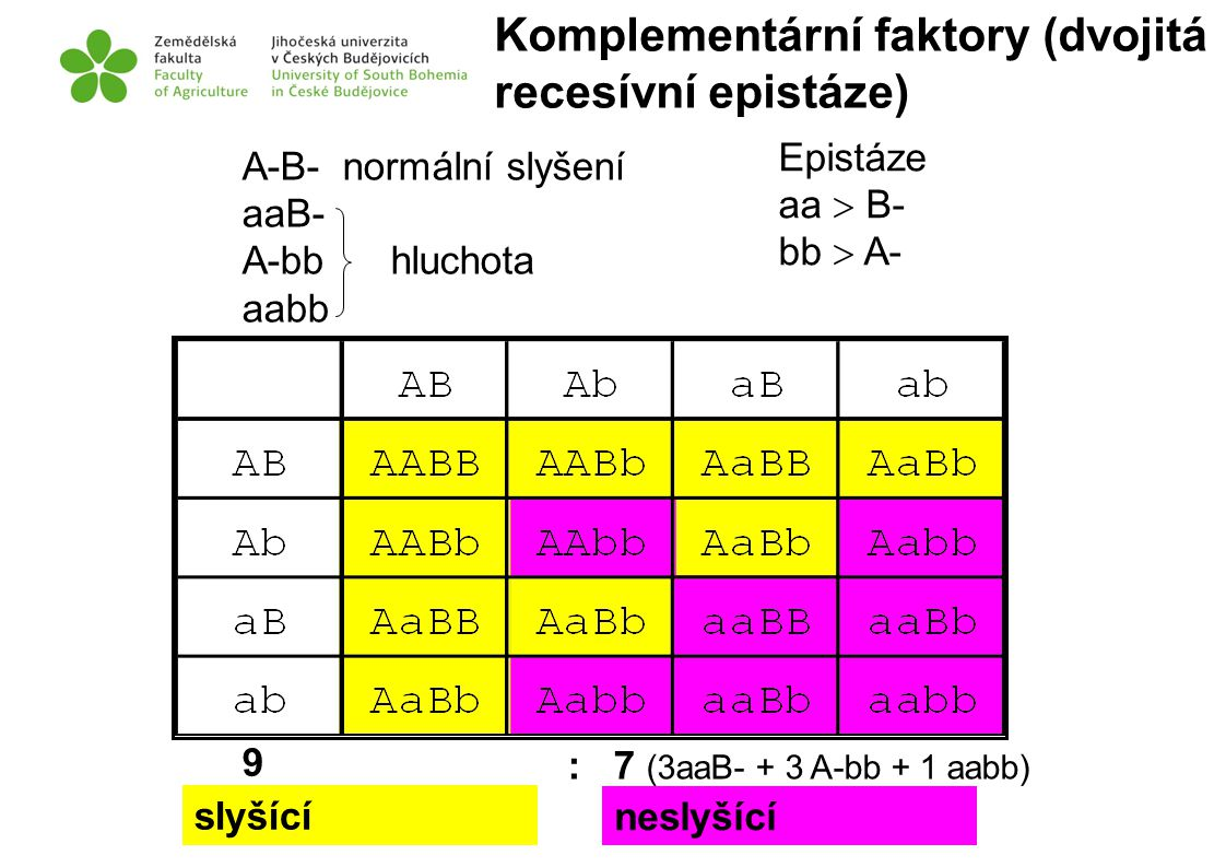 Komplementární faktory (dvojitá recesívní epistáze)