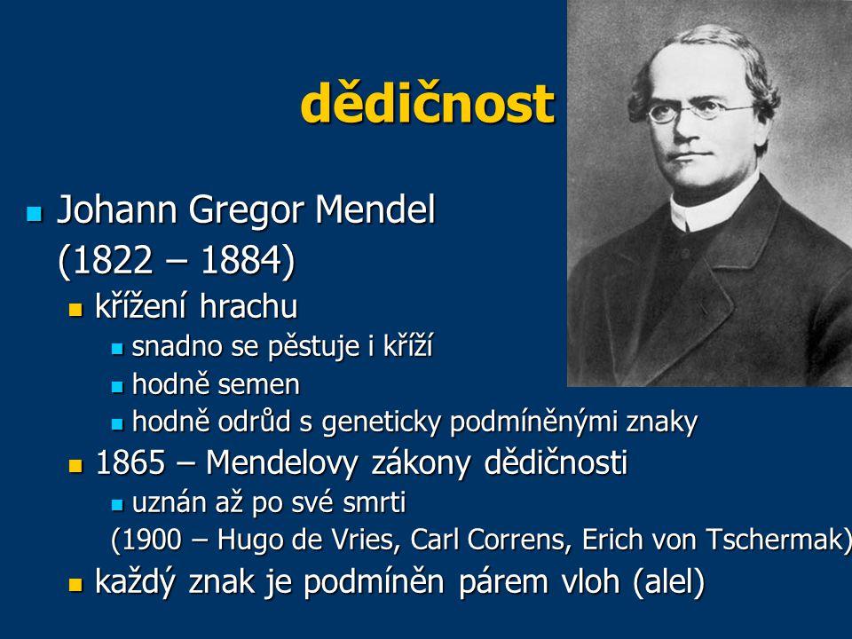 dědičnost Johann Gregor Mendel (1822 – 1884) křížení hrachu