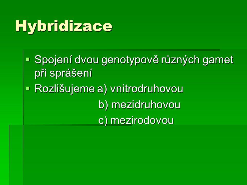 Hybridizace Spojení dvou genotypově různých gamet při sprášení