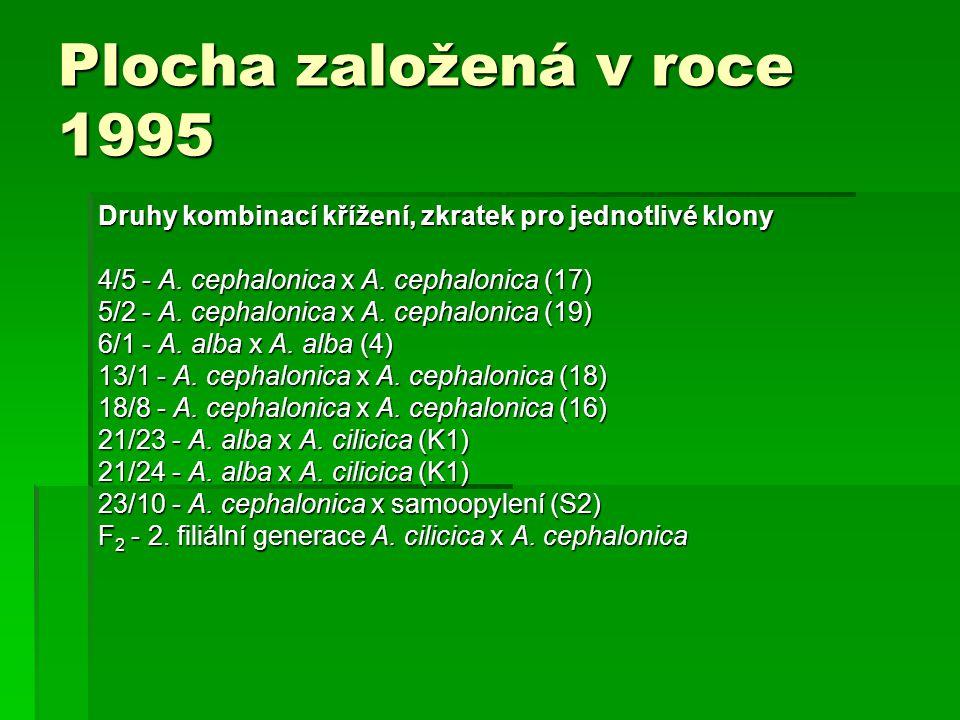 Plocha založená v roce 1995 Druhy kombinací křížení, zkratek pro jednotlivé klony. 4/5 - A. cephalonica x A. cephalonica (17)