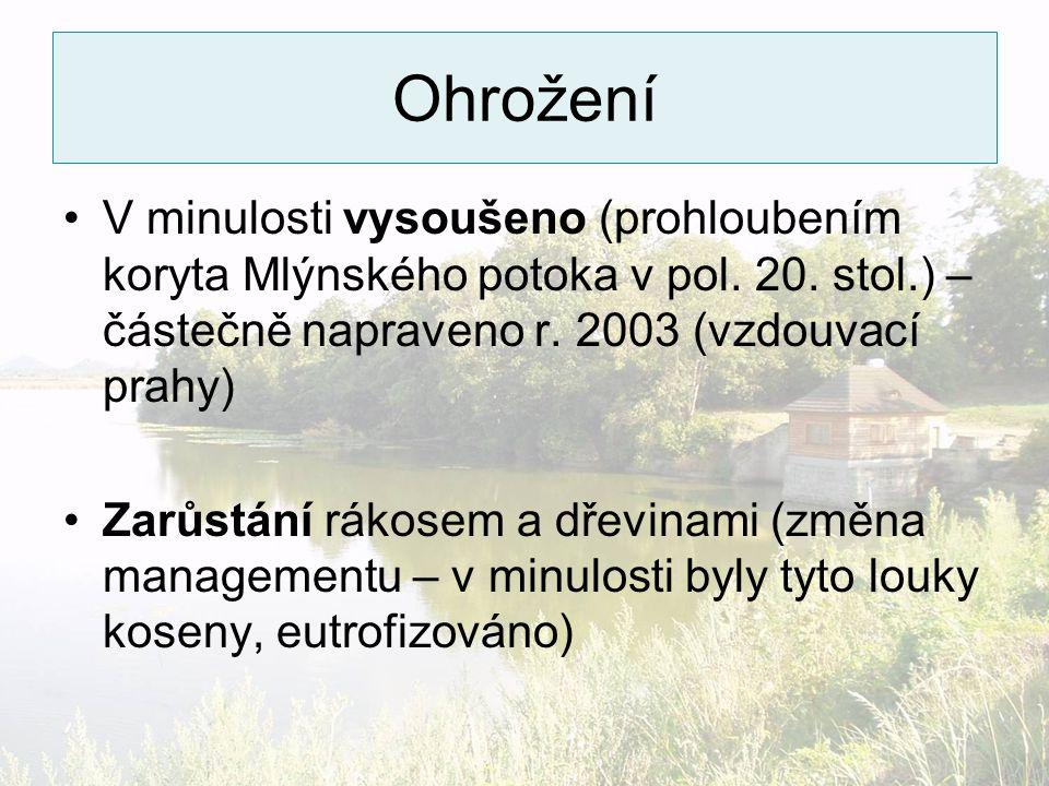 Ohrožení V minulosti vysoušeno (prohloubením koryta Mlýnského potoka v pol. 20. stol.) – částečně napraveno r. 2003 (vzdouvací prahy)