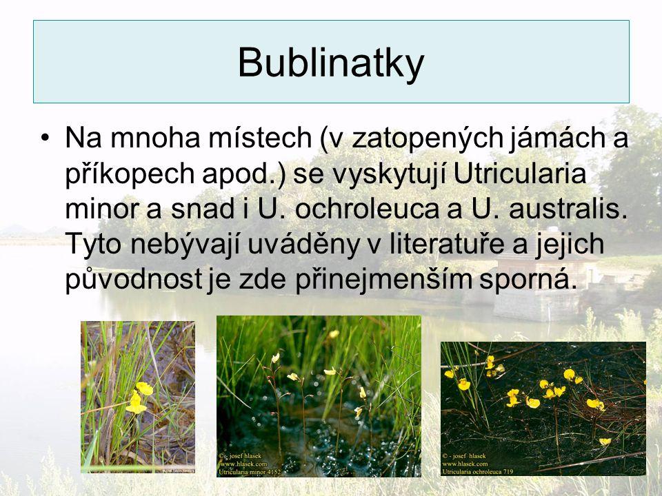 Bublinatky