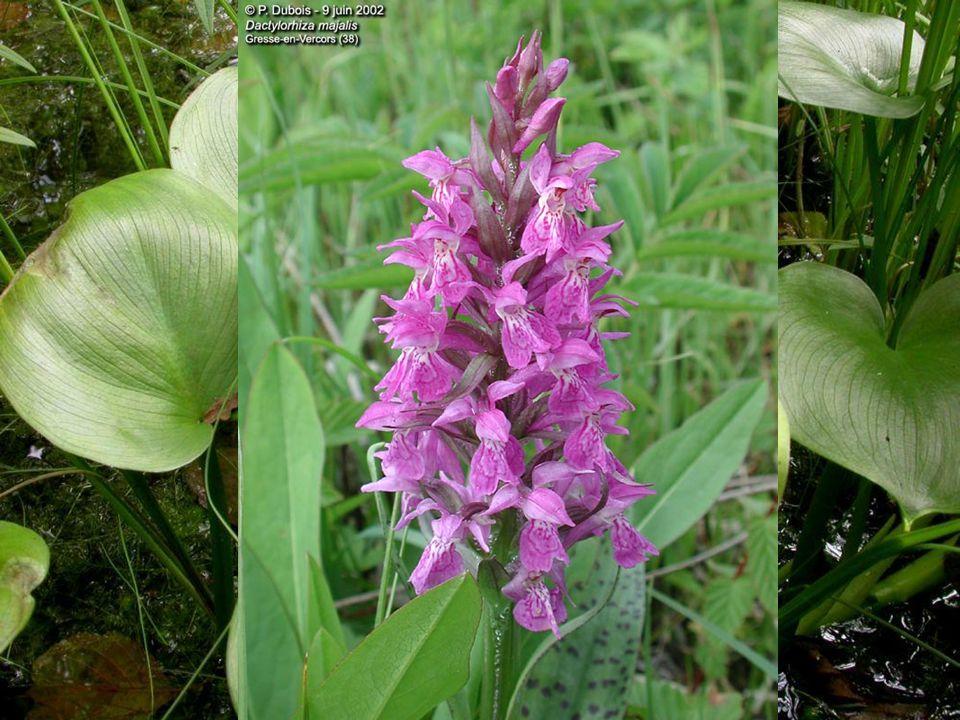 Další významné druhy rostlin
