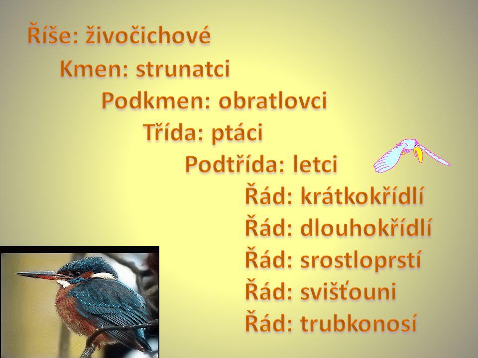 Říše: živočichové Kmen: strunatci. Podkmen: obratlovci. Třída: ptáci