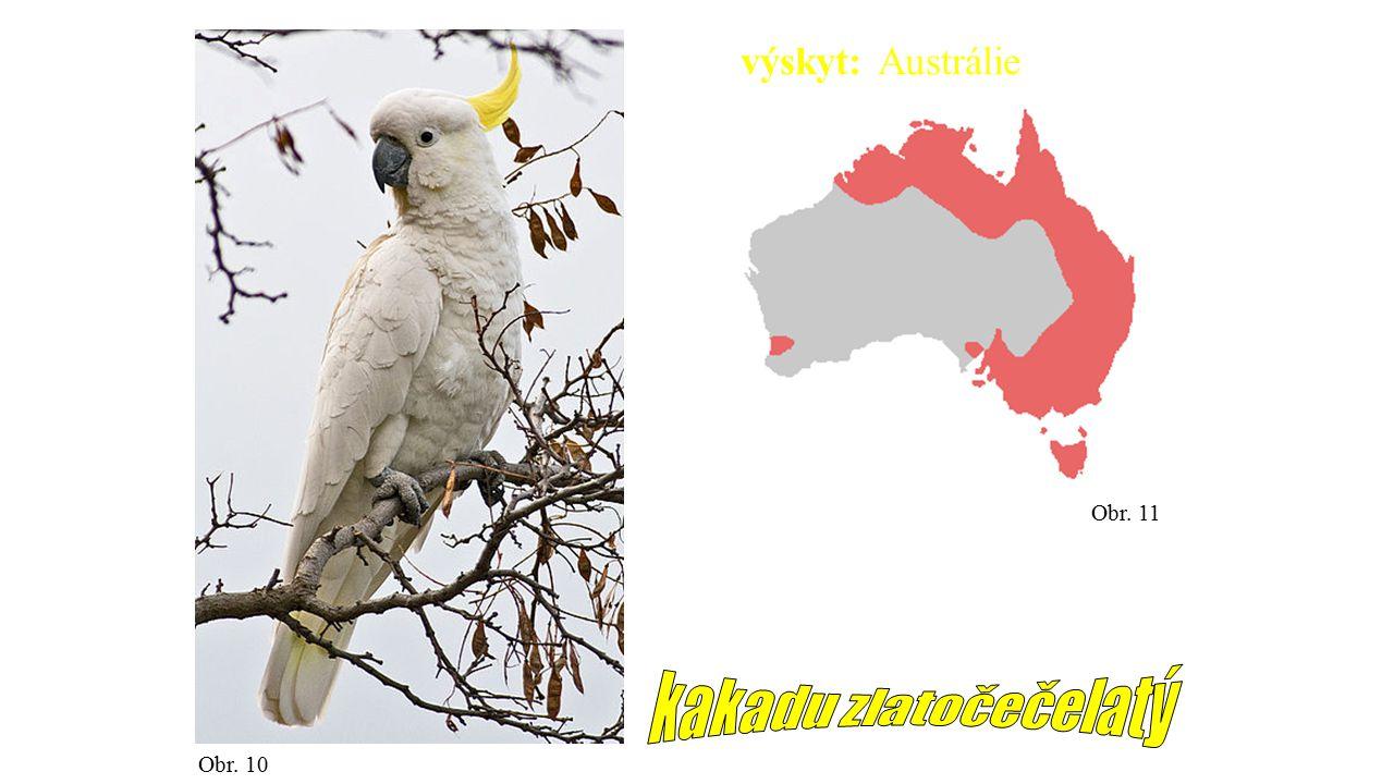 výskyt: Austrálie Obr. 11 kakadu zlatočečelatý Obr. 10