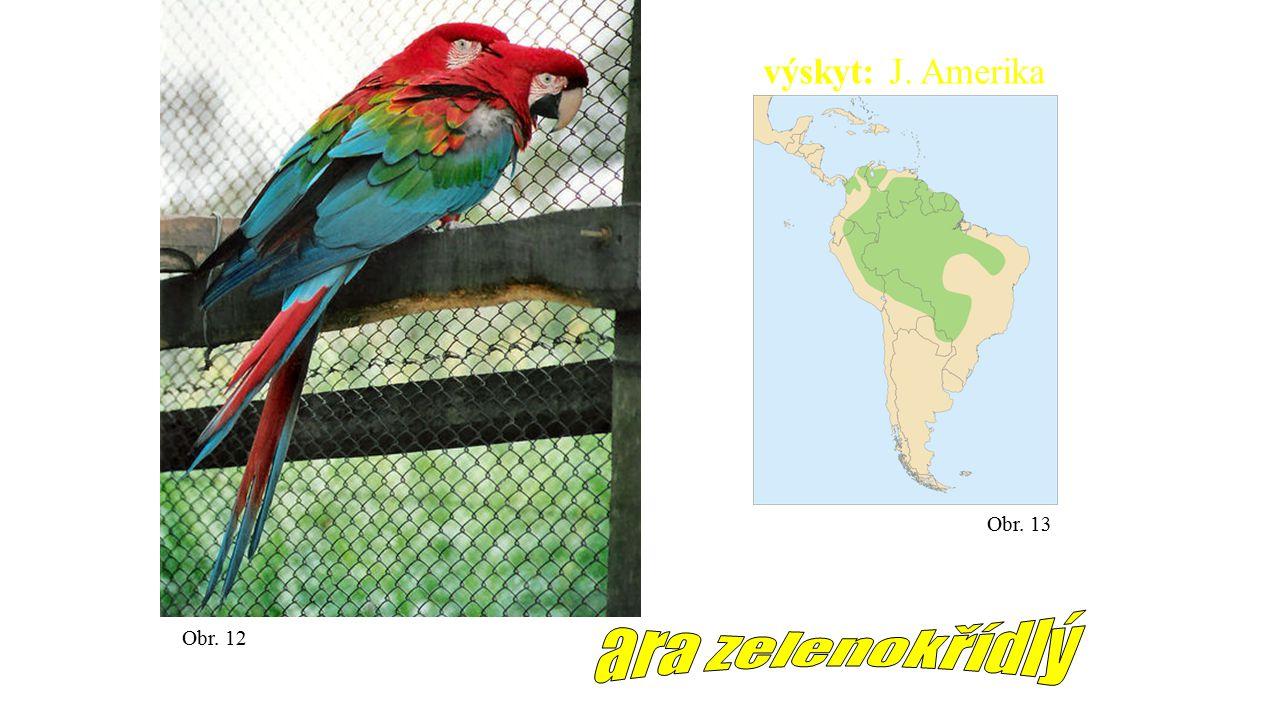 výskyt: J. Amerika Obr. 13 ara zelenokřídlý Obr. 12