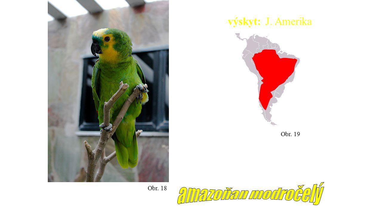 výskyt: J. Amerika Obr. 19 Obr. 18 amazoňan modročelý