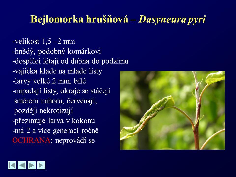 Bejlomorka hrušňová – Dasyneura pyri