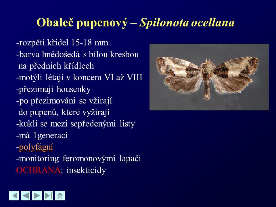 Obaleč pupenový – Spilonota ocellana