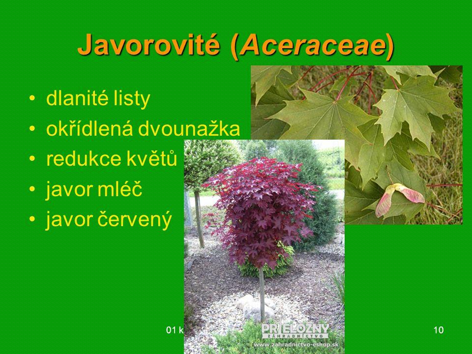Javorovité (Aceraceae)