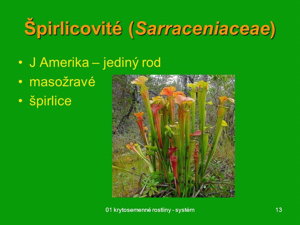 Špirlicovité (Sarraceniaceae)