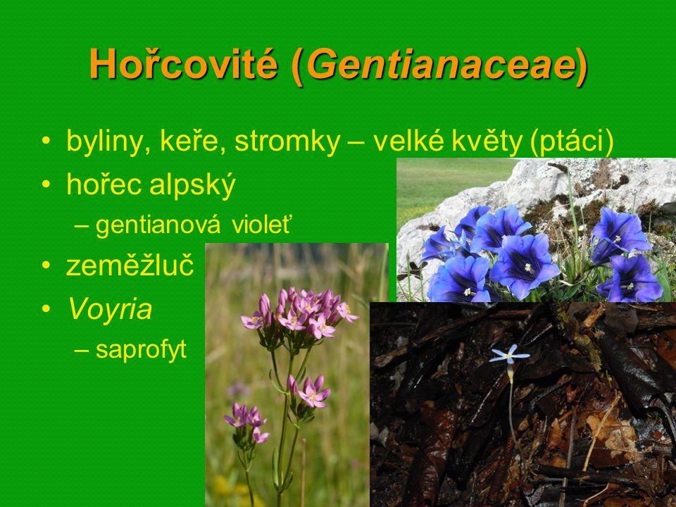 Hořcovité (Gentianaceae)