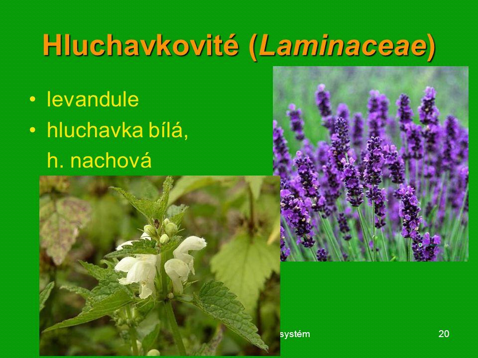 Hluchavkovité (Laminaceae)
