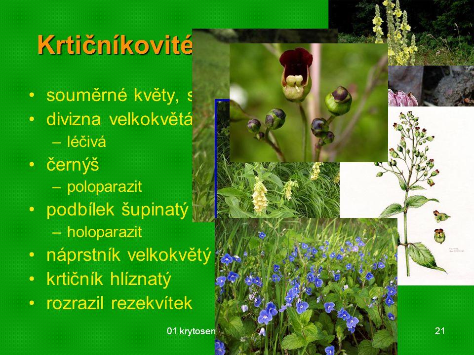 Krtičníkovité (Scrophulariaceae)