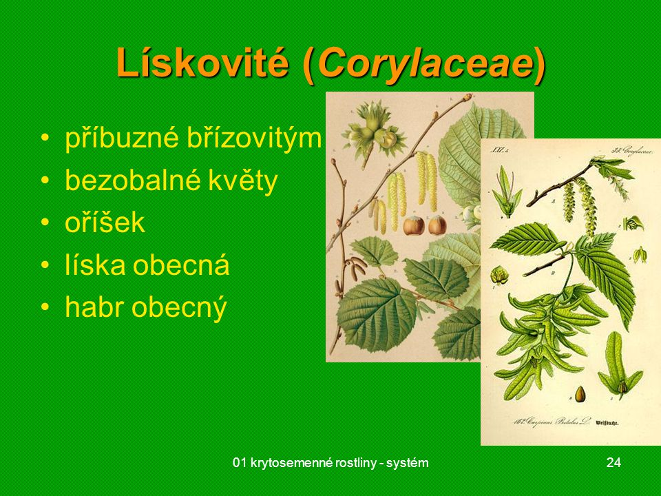 Lískovité (Corylaceae)