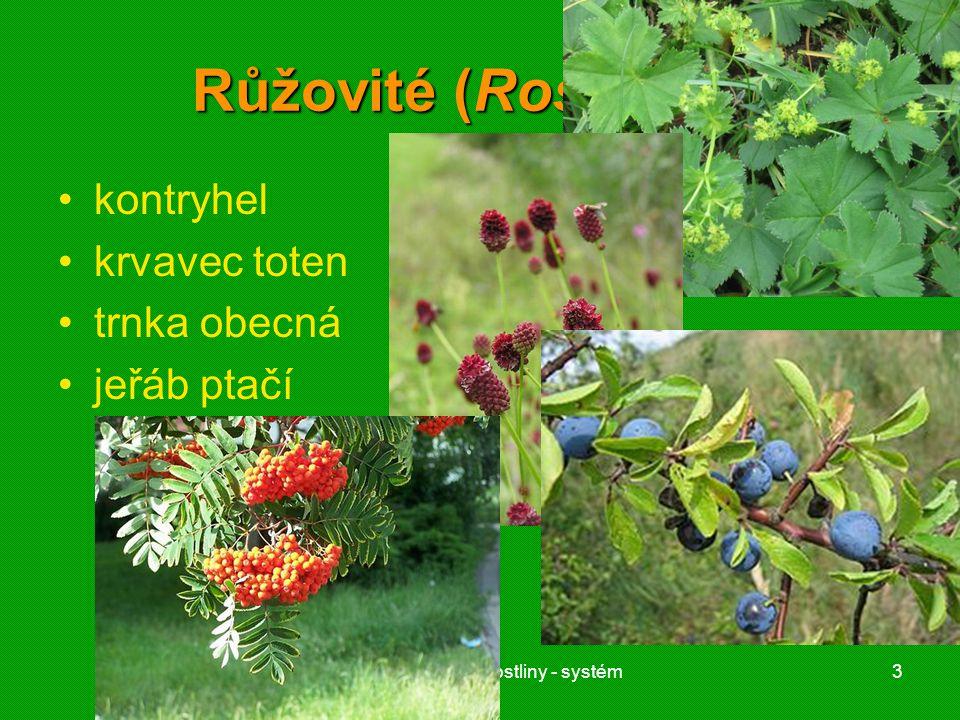 01 krytosemenné rostliny - systém