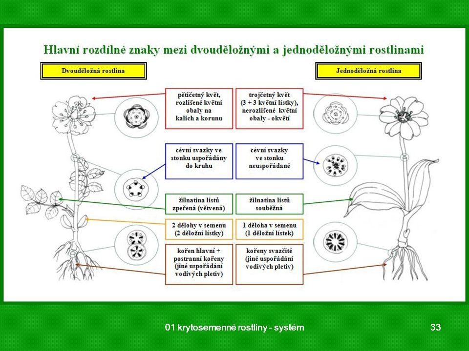 01 krytosemenné rostliny - systém 01 krytosemenné rostliny - systém 33