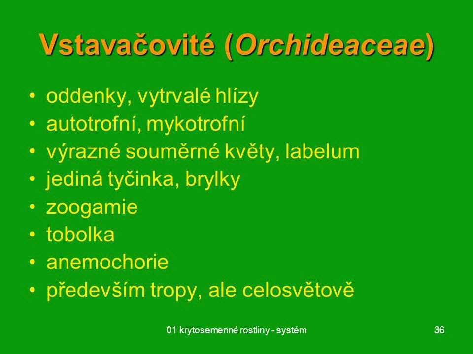 Vstavačovité (Orchideaceae)
