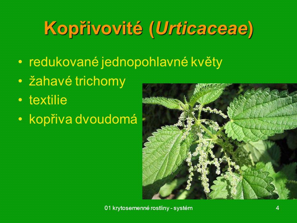 Kopřivovité (Urticaceae)