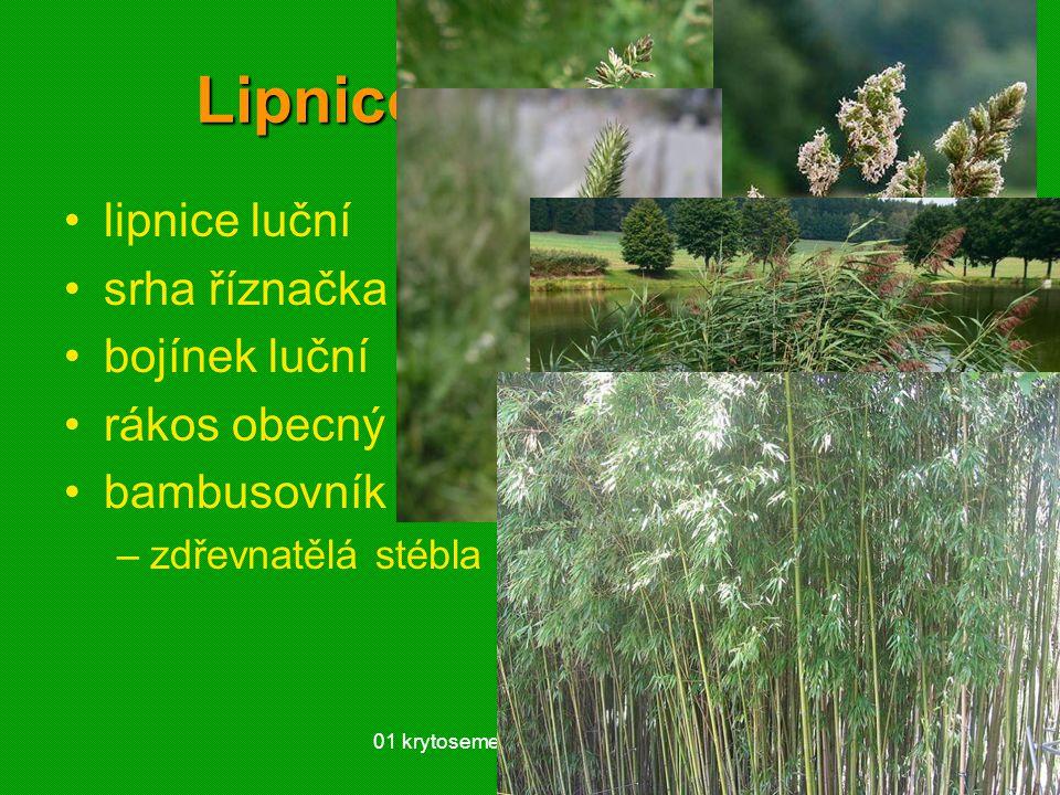 Lipnicovité (Poaceae)