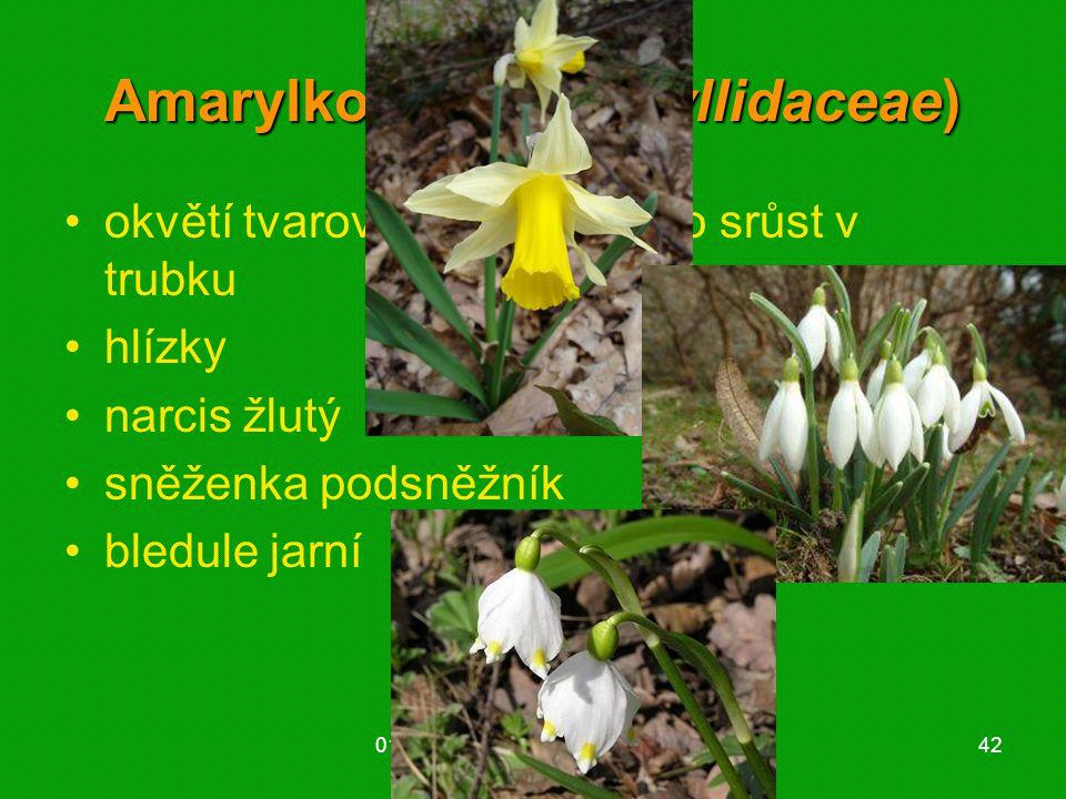 Amarylkovité (Amaryllidaceae)